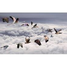Манки на прочих птиц