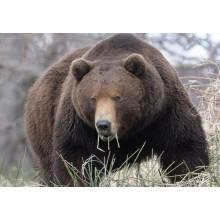 Приманки на медведя